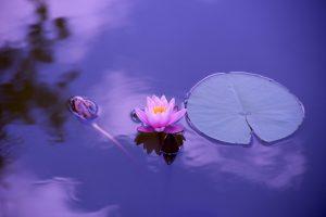 медитация цветок