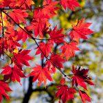 Заработок на вторсырье: как построить бизнес на осенних листьях?