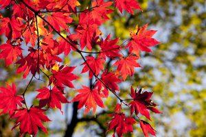 бизнес на осенних листьях