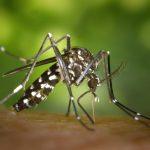 Народное средство от комаров: рецепт сибиряков