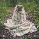 Пошив одежды для домашних животных