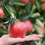 Дефицит витамина С: чем грозит и как исправить?