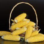 Как правильно варить кукурузу в початках и без початков в кастрюле?