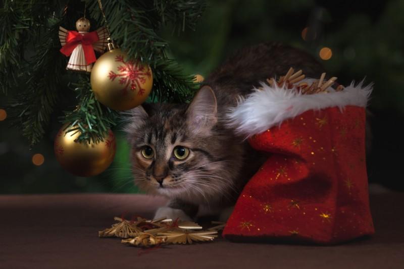 Кот под елочкой