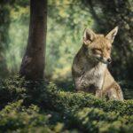 Сказка про лису-обманщицу, которая научилась говорить правду