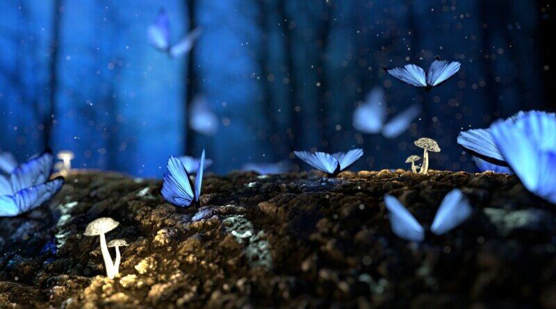 butterfly-2049567_1920-800x445.jpg